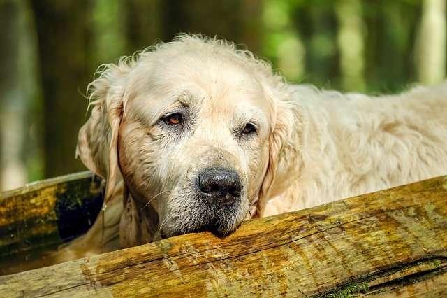 lasciti testamentari cani animali